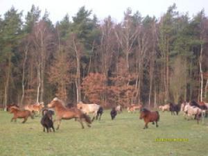 Unsere Ponys toben den ganzen Tag draußen herum