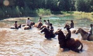 Baden mit den Ponys im See.