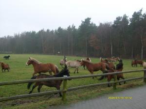 Unsere Ponys können sich den ganzen Tag austoben