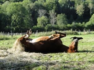 Pferdeglück.....