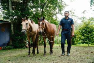 Pferde werden zurueck zur Weide gebracht