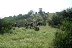 umzäunte und private 33 Hektar freier Auslauf