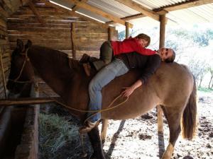 ruhige Pferde, auch Kinder und Reitanfänger