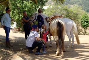 Umgang und Pflege der Pferde
