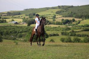 English Language Tuition - Reitferien f�r Kinder bei Oakwood Stables in Irland!