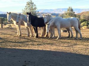 Wir legen Wert auf eine artgerechte Pferdehaltung