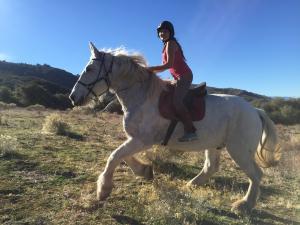 Galoppade auf der Ranch- Kaltblutreiten