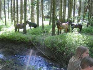 Haltepause beim Picknick im Wald