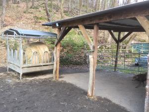 Bild 1 von Holzhaus am Waldrand