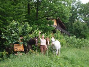 Bild 4 von Holzhaus am Waldrand