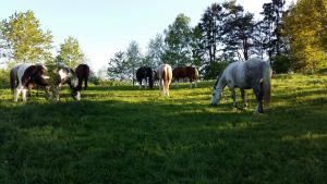 Bild 2 von Morgen Ranch