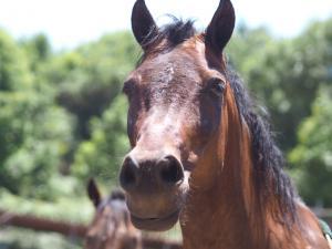 Brego / Pony