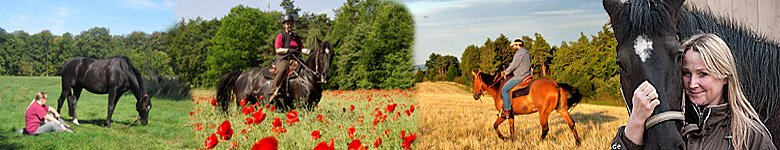 Guest Horses Welcome – Accommodations for Horse & Riders