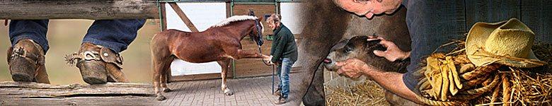 Arbeiten auf dem Reiterhof oder Ranch - Pferdejobs weltweit