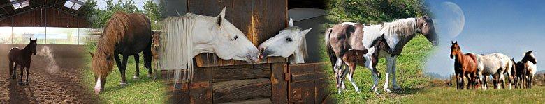 Freie Pferdeunterkünfte auf Reiterhöfen und Reitställen